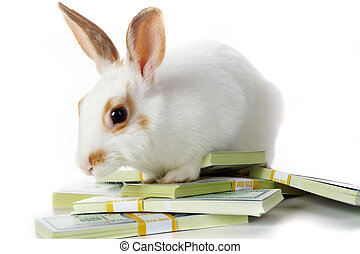 Rabbit with money - Image of cautious rabbit with dollar...
