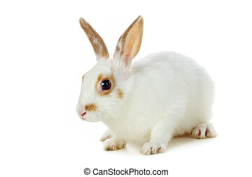 Fluffy mammal - Image of soft white rabbit isolated over...