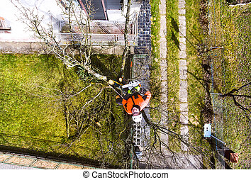 Lumberjack with chainsaw and harness pruning a tree....
