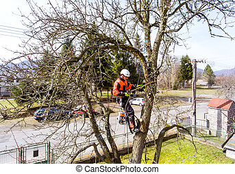 Lumberjack with saw and harness pruning a tree.