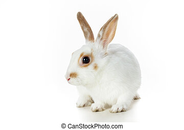 Cute animal - Image of cautious rabbit on white background...