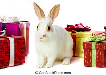 Rabbit and gifts - Image of cautious rabbit surrounded by...