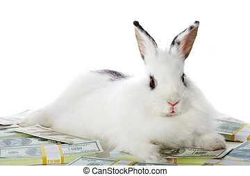Rabbit with money - Image of cautious rabbit on heap of...