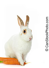 Bunny with carrots - Image of cautious rabbit with carrots...