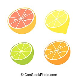 Citrus fruit collection. Vector illustration