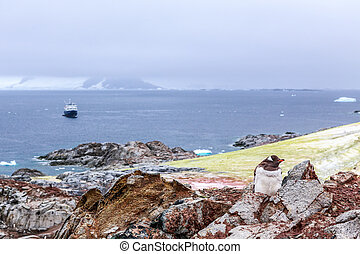 Gentoo penguin chick stitting on the rocks with cruise ship...