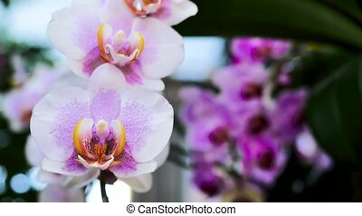 Light pink orchids. Using the slider