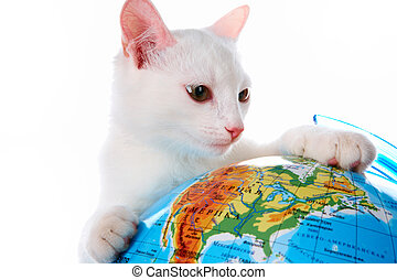 Curious cat - Image of playful white cat looking at globe in...