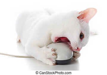 Cat with mouse - Image of playful white cat biting computer...