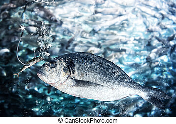 Fish takes the bait to lure - Small fish takes the bait to...