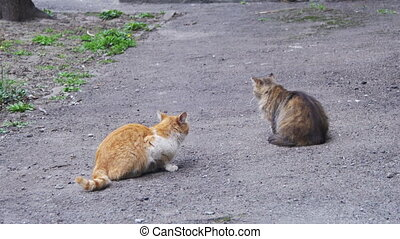 Two Homeless Cats on the Street. Two homeless gray and red...