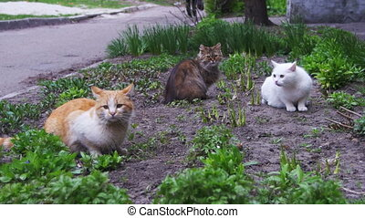 Three Homeless Cats on the Street in the Park. Three...
