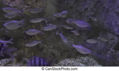 Beautifully Marine Aquarium with silvery fish stock footage...