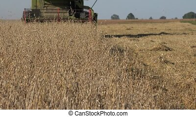 thresher combine machine harvesting ripe oat ears in summer...