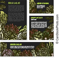 Salads and leafy lettuce vector templates posters - Lettuce...