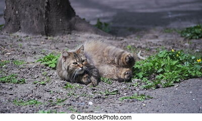 Homeless Pregnant Cat Lies on the Ground in the Park and is...