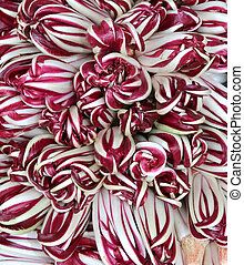 variety of Treviso late purple radicchio in a greengrocer