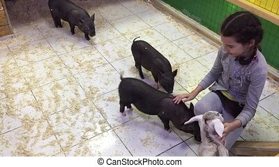 Black pig. Girl playing with black pigs in a animal contact...