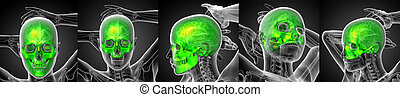 3d rendering medical illustration of the human skull