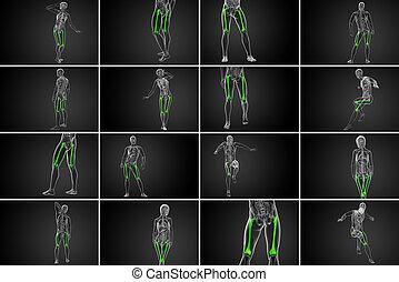 3d rendering medical illustration of the femur bone