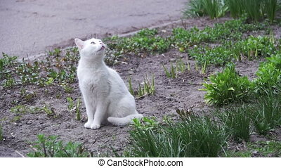 Homeless White Cat on the Ground in the City Park. Slow Motion