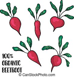 beetroot set - vector set of beetroots on isolated...
