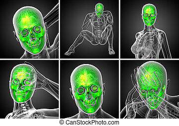 3d rendering  medical illustration of the skull