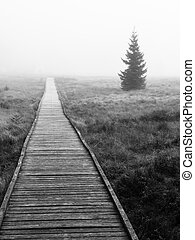 Wooden path in peat bog in black and white, Bozi Dar, Czech...