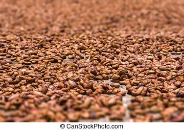 Cocoa beans from Ambanja, Madagascar
