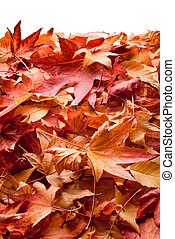 leafs in autumn - colourful carpet of dried leafs in autumn