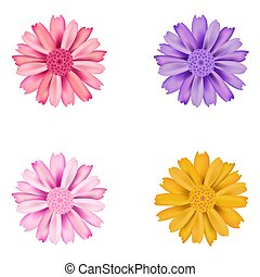 Set of dahlia flowers