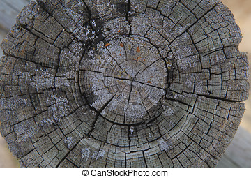 Top view of a cut tree