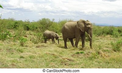 elephant with baby or calf in savanna at africa