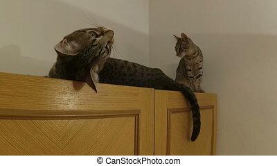 Three shots of teasing cats