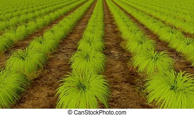Green plant rows and wooden board No Spray 4K - Organic eco...