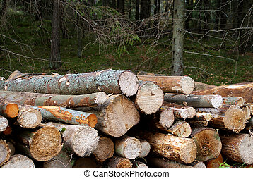Firewood Source of Energy - Detail of dry firewood stacked...