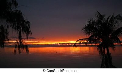 beautiful red sunset on the beach with a palm tree