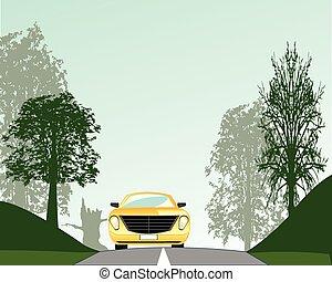 Road in wood