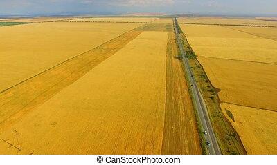 Drone flight over the ripe rye ears field - Drone flight...