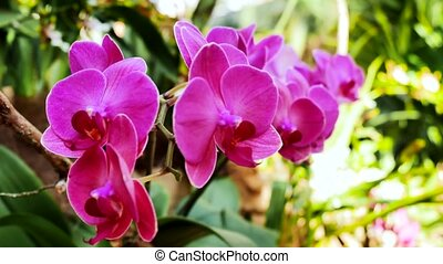 Light pink orchids in the garden. Using the slider.