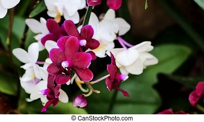 Small orchid flowers. Using the slider