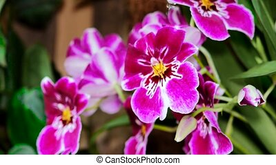 Red white orchids in the garden. Using the slider.
