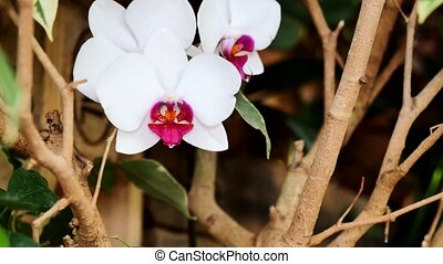 White orchids in the garden. Using the slider.