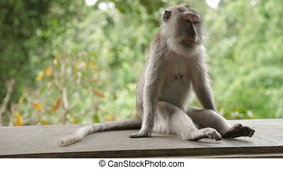 Monkey sitting on a rock and goes out of frame. Monkey...