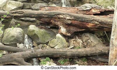 Waterfalls cascades down through fallen trees and moss...