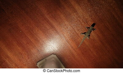 Gecko sitting on the ceiling and hunts on small insects....