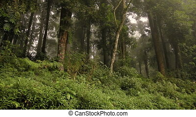 Evergreen jungle forest after rain. Natural misty...