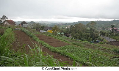 Panorama view on agricultural fields near Batur volcano Kintamani. Winter rainy and cloudy season. Bali Indonesia.