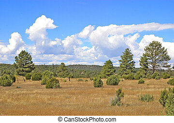 Juniper Grassland in old burn - Juniper Grassland 8 years...