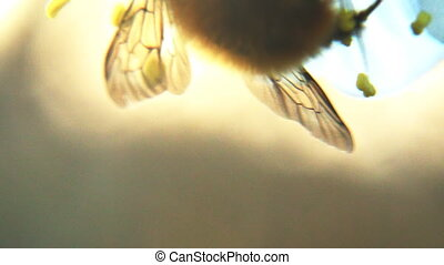 The bee collects the nectar from the flowers